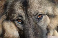 Осенью ненужных собак прогоняют с дач, которые они охраняли летом.