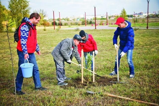 Сотрудники МТС высадили саженцы рябины и плодовой груши.