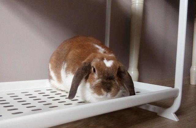 ВГеоргиевске мужчина похитил 10 кроликов ценной породы