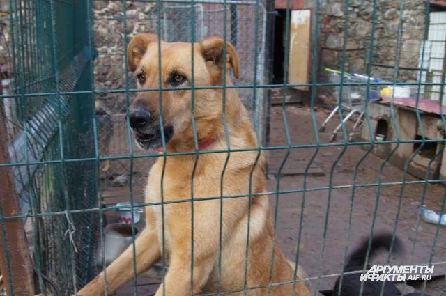 Укушенная во время драки собак калининградка добилась компенсации.
