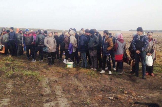 82 мигранта нелегально работали наполях Тульской области