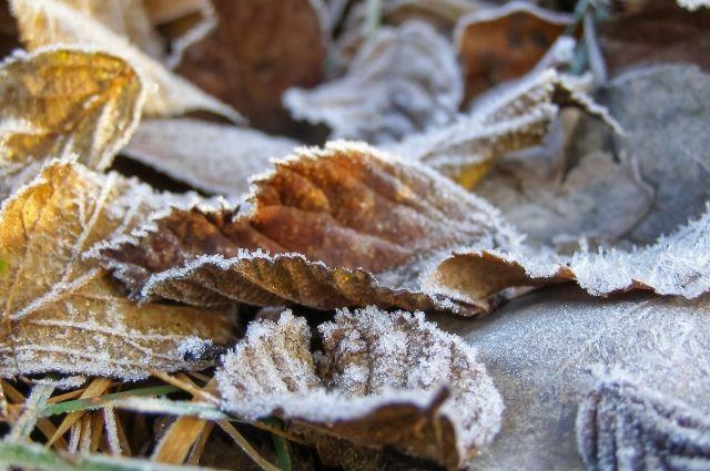 Холоднее всего будет в ночь на 10 октября.