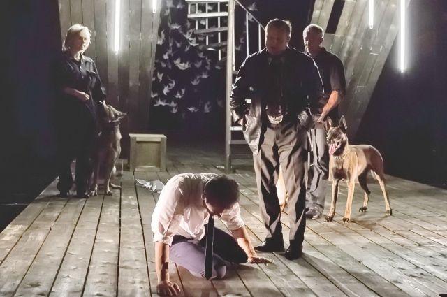 Собаки на сцене театра.