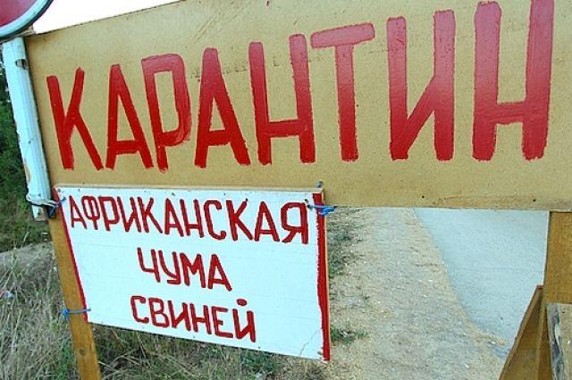 Вспышка АЧС произошла в Красноярском крае.