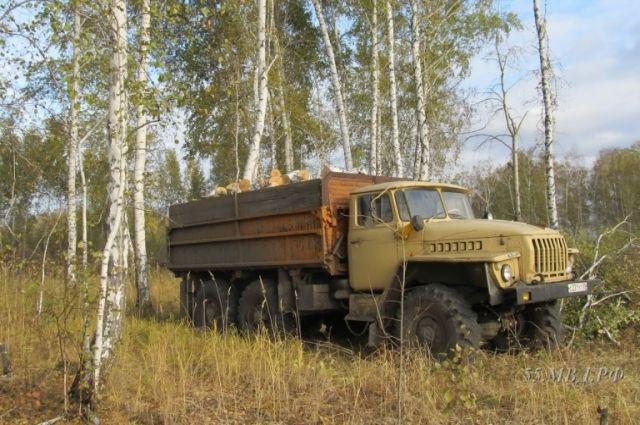 ВОмской области нелегально  вырубили 70 берёз