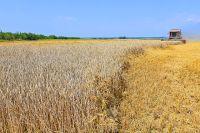 Г. Цаплин для своей пекарни покупает муку из пшеницы только твёрдых сортов, которую в основном собирают в Сибири.