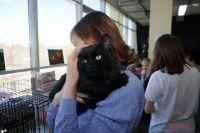 На выставке с животными можно пообниматься и забрать домой.