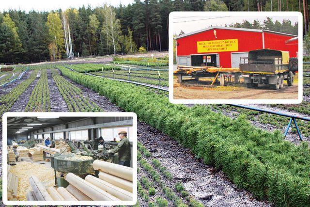 Среди задач хозяйства сегодня не только сохранение, защита и посадка  леса, но и выход на новый уровень развития производства.
