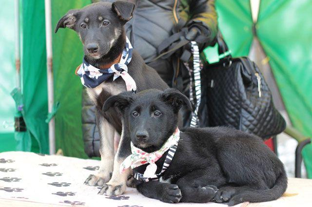 Благотворительные акции для бездомных животных уже несколько раз проходили в Ярославле.