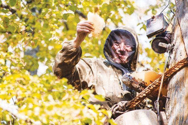 «На удивление, пчёл в лесу достаточно».