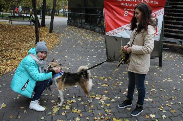 Хозяев домашних собак призывают быть осторожными в городских парках.