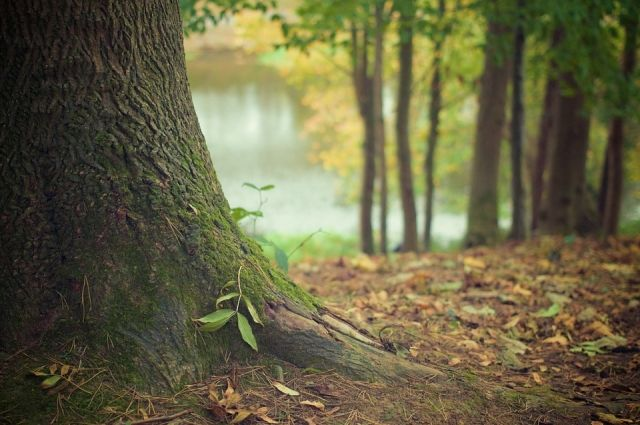Женщину искали в лесах под Новосибирском.