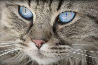 Тюменские зоозащитники выступили за чипирование домашних животных