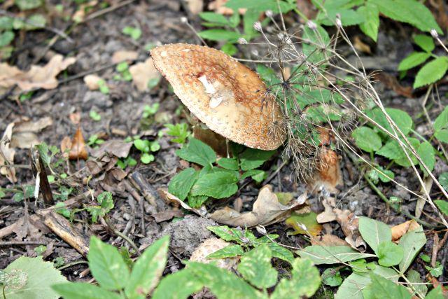 Под Волгоградом семья отравилась грибами: 8-летняя девочка скончалась