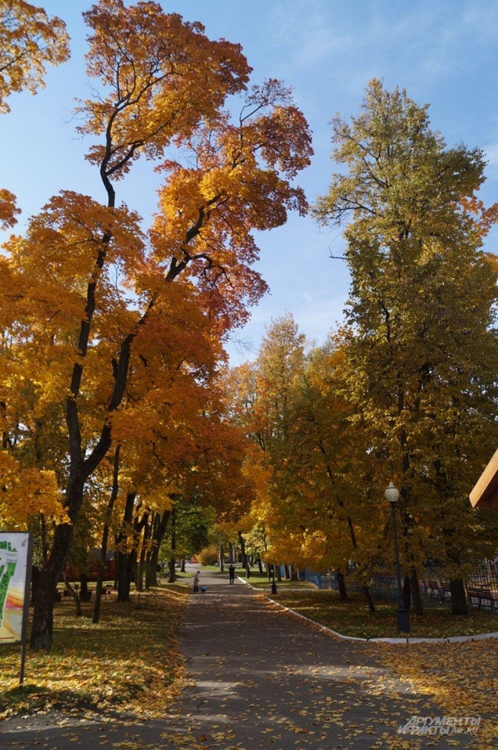 Аллея парка культуры и отдыха имени В.Г. Белинского.