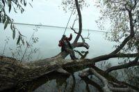Огромным ивам около 150 лет. Со временем вода подмыла их корни, и деревья легли над водой. Церковный староста Владимир Алемасов добывает пропитание коту Мурзику.