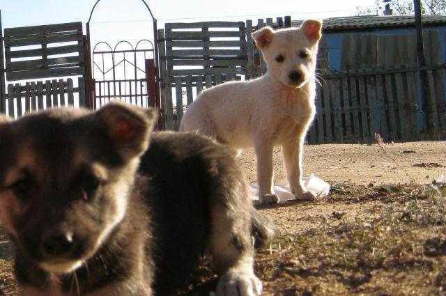 ВСмоленске под бетонными плитами умирают щенки