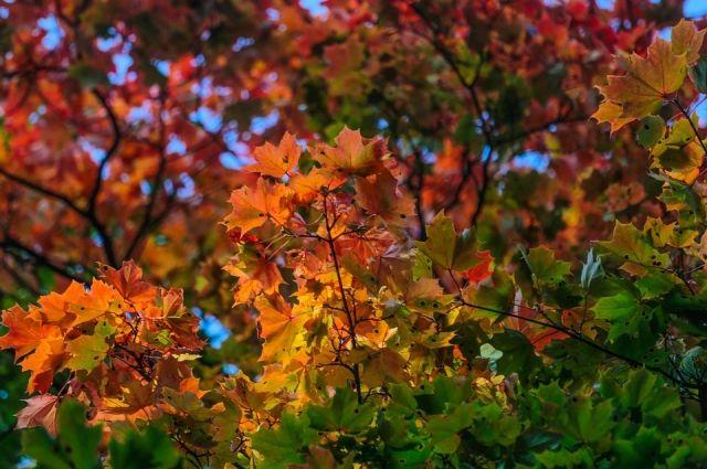 Осень - самое яркое время года. Зачем жзе дома сидеть?