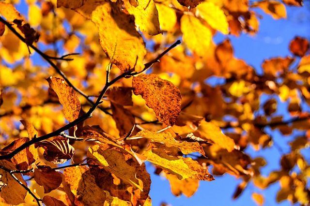 Осенью тоже можно найти себе массу полезных занятий.