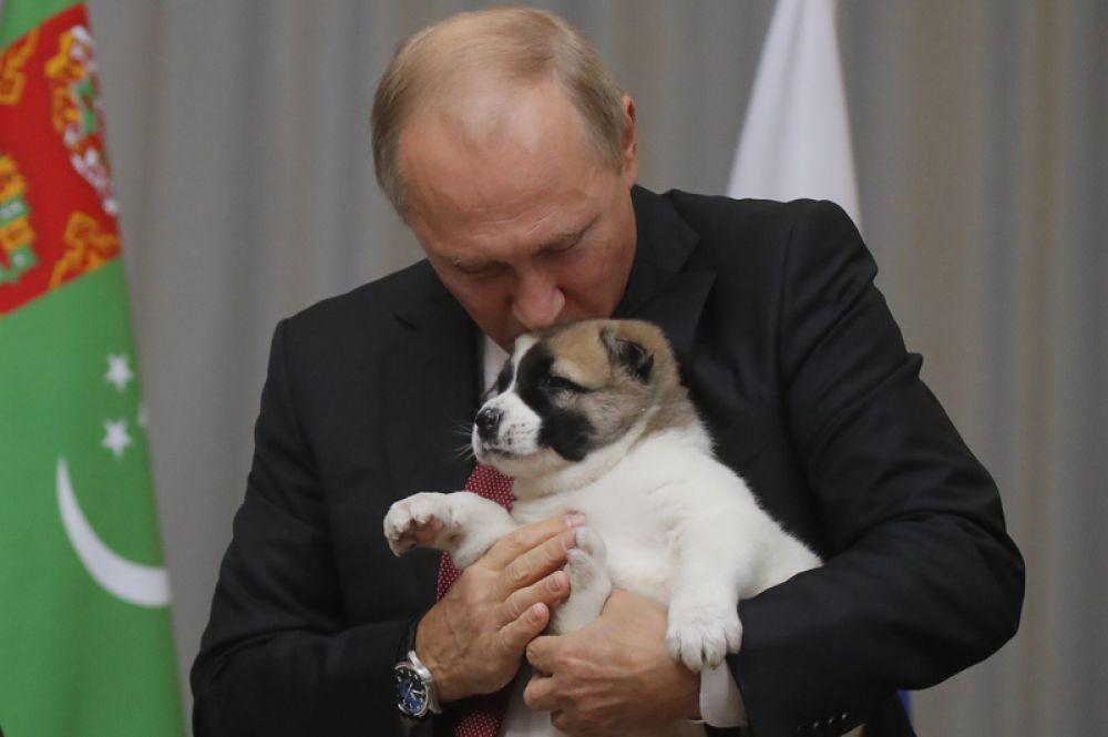 11 октября. Глава Туркмении Гурбангулы Бердымухамедов встретился с Владимиром Путиным и подарил ему нового питомца в честь дня рождения. Собаке дали кличку Верный.