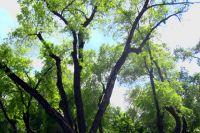 Тюменцы представили проект Затюменского парка