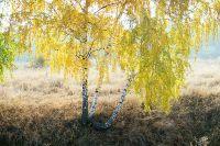 В Тюменской области арендатор лесного участка заплатил двойной штраф