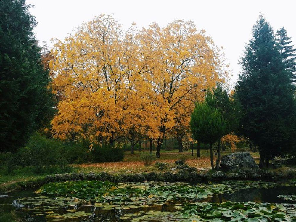 Ботанический сад КФУ (Воронцовский парк).