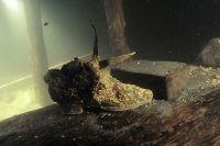 Глава Центра подводных исследований предполагает, что работы на «Архангеле Рафаиле» хватит еще лет на 5.