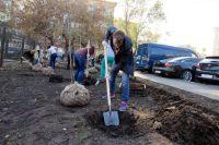 210 кустарников барбариса высадили тюменцы на пустыре по улице Немцова