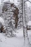 Серебристый снег лежит на камнях и на деревьях.