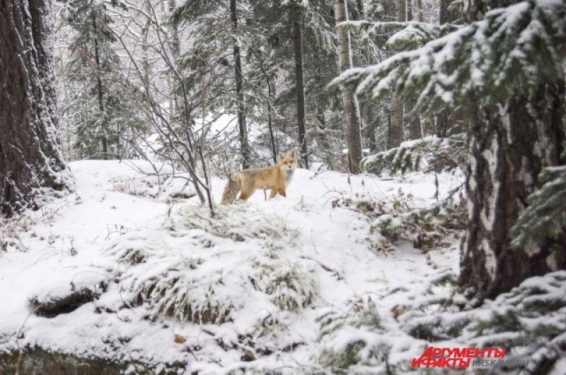 Пейзаж с участием лисы кажется сказочным.