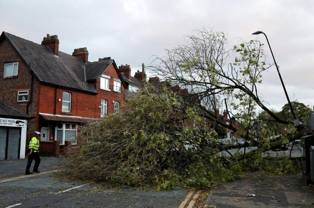 Полицейский стоит рядом с упавшим деревом в городе Сейл, Великобритания.