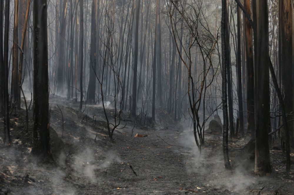 Лесные пожары в Чандебрито, Галисия, Испания.