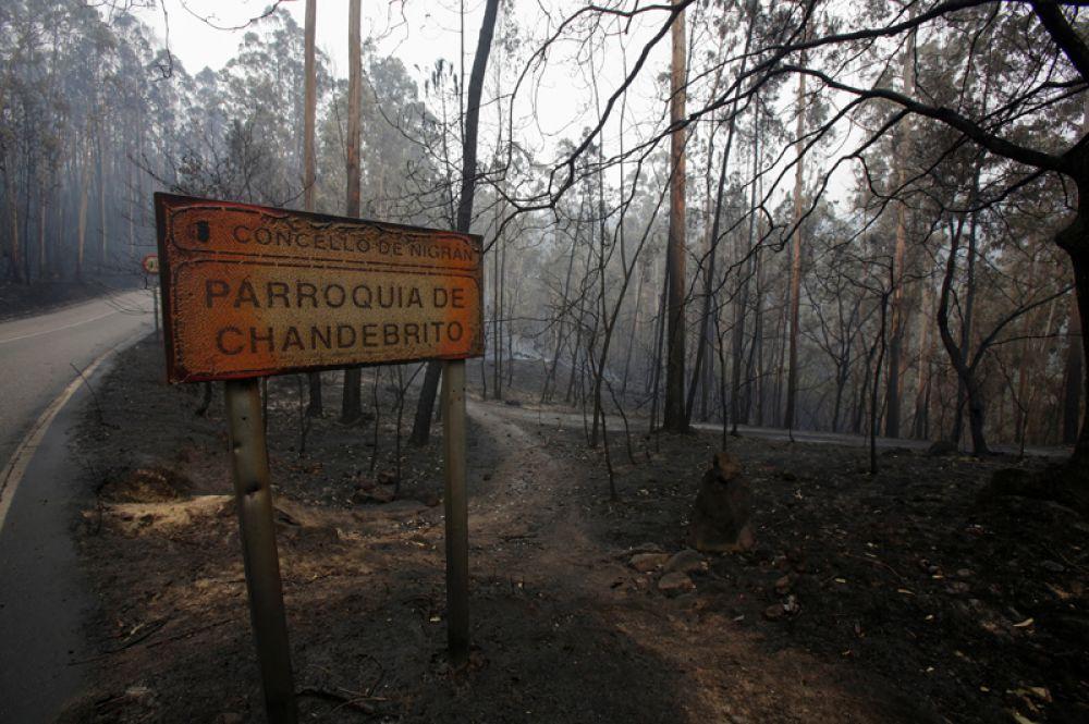 Сгоревший лес в Чандебрито, Галисия, Испания.