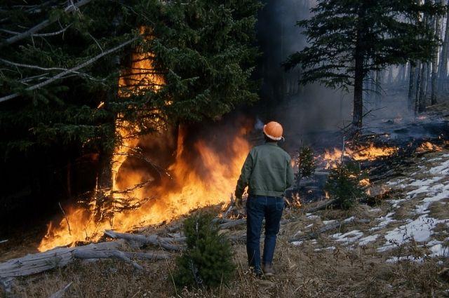 Из-за изменения климата леса усыхают и чаще горят.