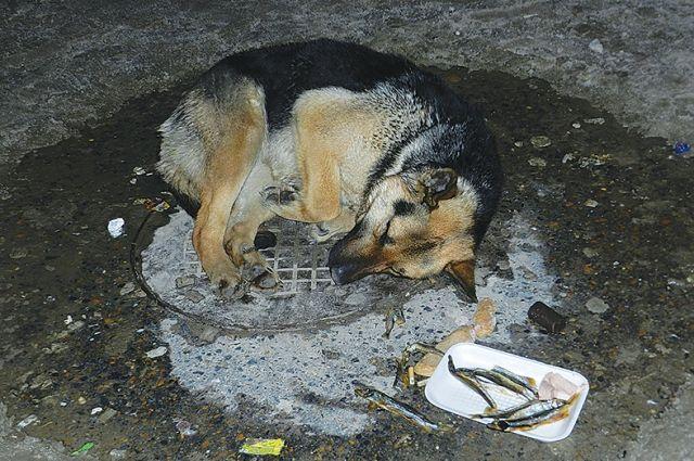 Даже живым псам в городе нет места.
