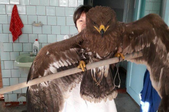 При строительстве моста в Кузбассе рабочие обнаружили редкую птицу.