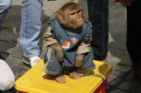 Животные испытывают сильнейший стресс из-за толпы и голода.