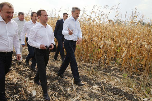 Медведев назвал урожай зерна лучшим за 100 лет