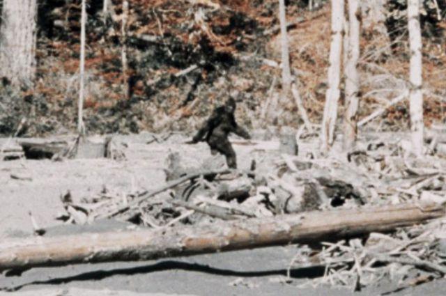 Калифорнийский йети на видео 1967 года.