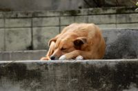 Жертвой винзилинских живодеров стала очередная собака