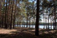 Незаконная вырубка лесов не только эстетическое преступление, но и экологическая беда.