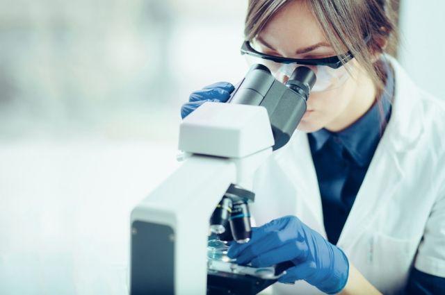 Ученые МГУ нашли новый вид моллюсков в Северной Европе
