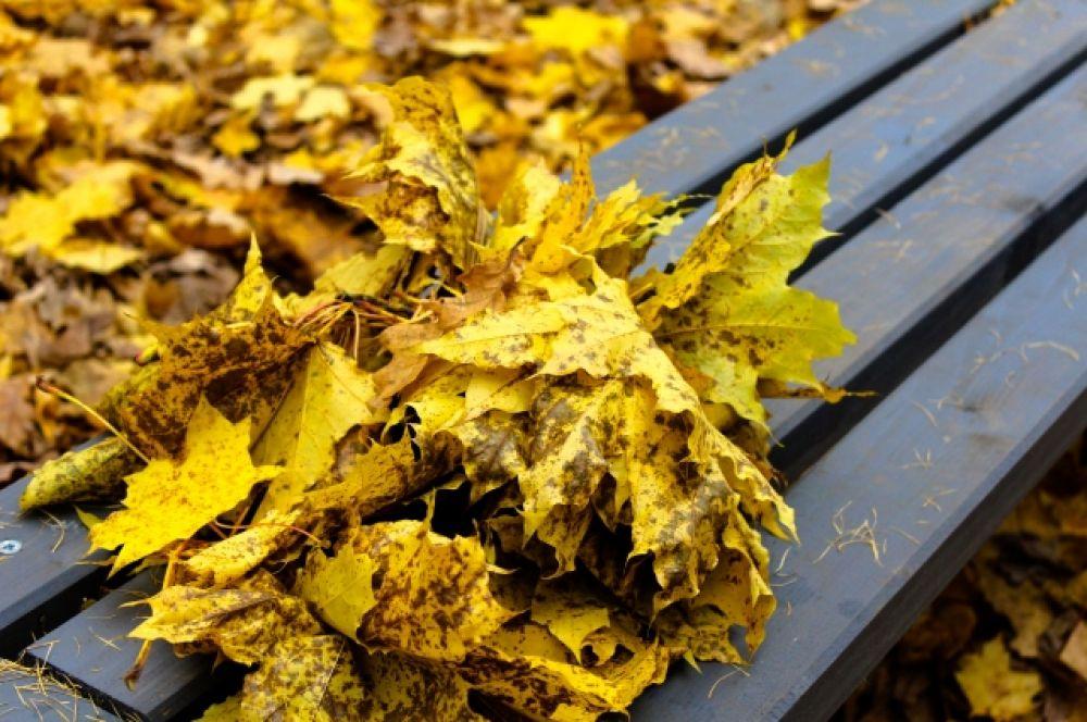 Пышный венок из кленовых листьев может встретить вас на первой же скамейке.