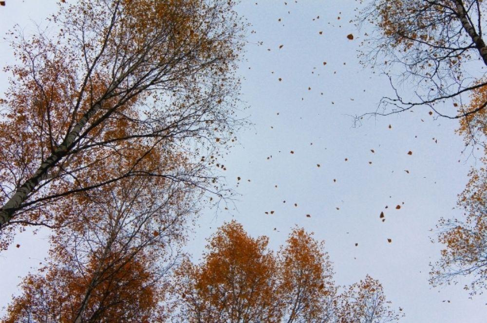 При малейшем дуновении ветерка целый ворох листьев спускается к вашим ногам…