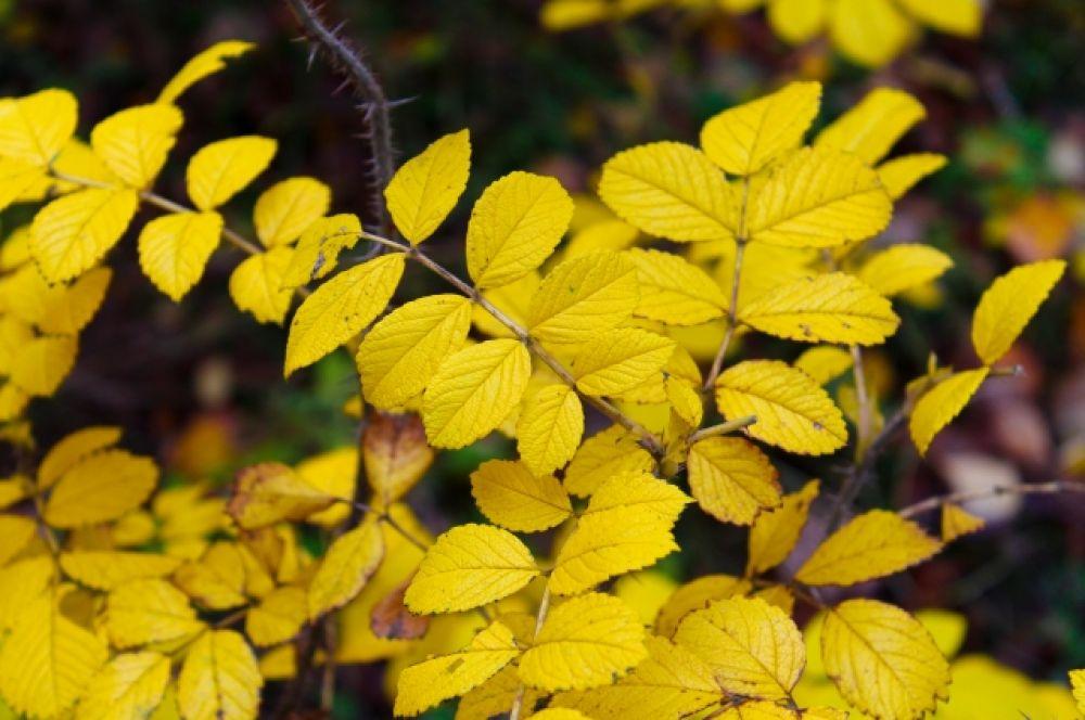 Осень раскрасила парк удивительно яркими красками.