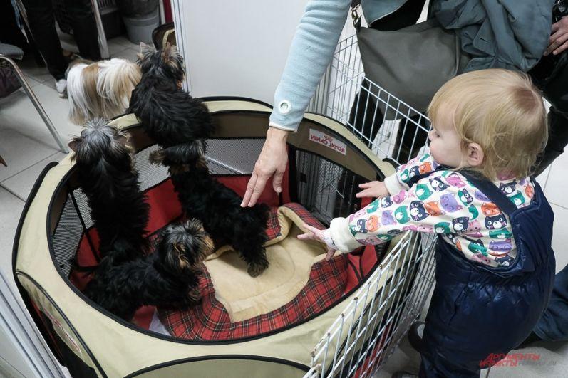 На ней представлены 100 пород собак от 60 заводчиков.
