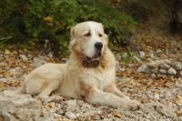 В Тобольске неизвестные выстрелили пять раз в собаку и бросили ее в реку