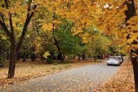 Экологи Тюмени обеспокоены: уборка опавшей листвы вредна для деревьев
