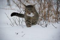 В Тюмени ждут мокрый снег и сильный ветер
